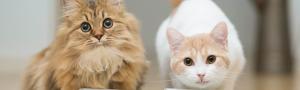 Особенности питания стерилизованных кошек