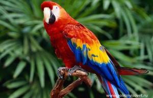 Полезные советы о попугаях