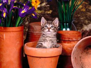 Animals_Cats__004302_