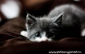 Что делать, если кошка заболела