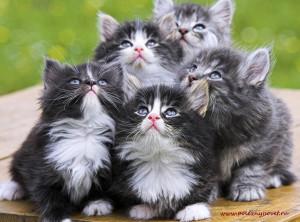 Что делать, если у кошки ушной клещ
