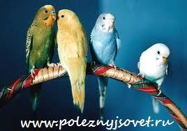 Как ухаживать за домашней птицей