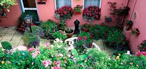 cvety-dlya-doma