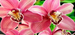 orhide9